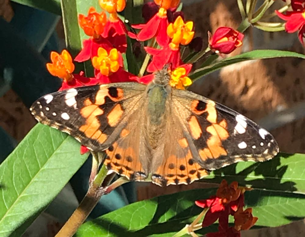 Butterflies, Bees, Birds and Brunch
