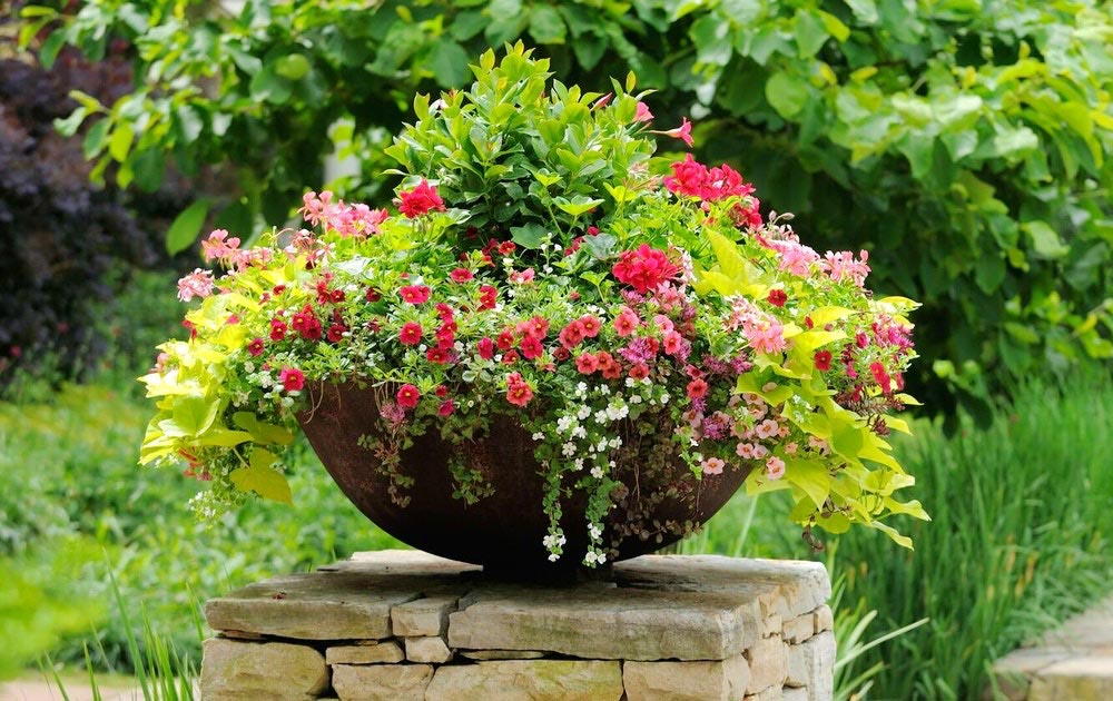 Planting Perfect Pots for Porch or Patio